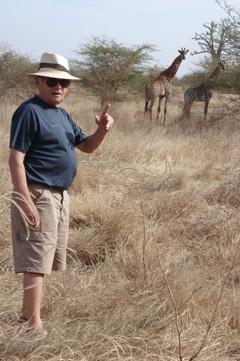 des girafes dans la savane du parc réserve de Bandia