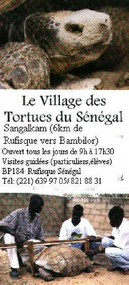 rock des tortues